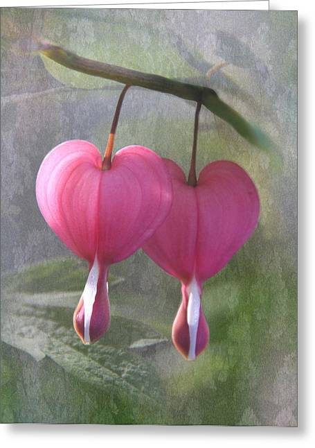 Bleeding Hearts Greeting Cards - Two Hearts Greeting Card by Angie Vogel