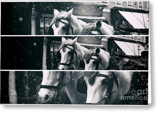 Salzburg Greeting Cards - Two Horse Panels Greeting Card by John Rizzuto
