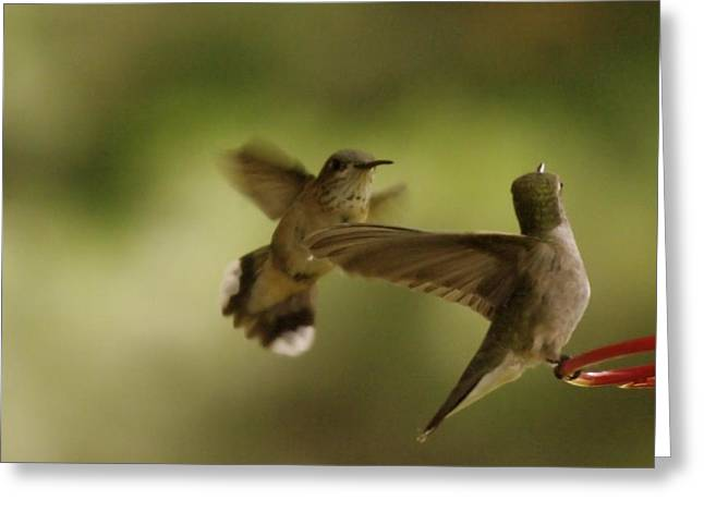 Bird Pin Greeting Cards - Two Hummers At The Drinking Well Greeting Card by Jeff  Swan