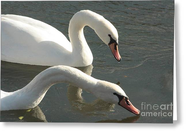 Best Sellers -  - Becky Greeting Cards - Two in Love Greeting Card by Becky Neu