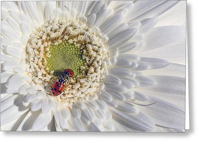 Two Ladybugs Meet Greeting Card by Garry Gay