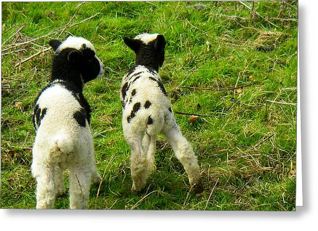 Geobob Greeting Cards - Two Lambs near Broadway Towers in the Cotswold District of England Greeting Card by Robert Ford