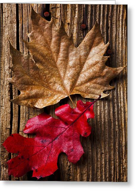 Rusty Nail Greeting Cards - Two leafs  Greeting Card by Garry Gay