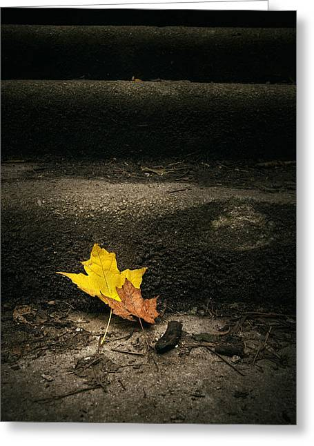 Debris Greeting Cards - Two Leaves on a Staircase Greeting Card by Scott Norris
