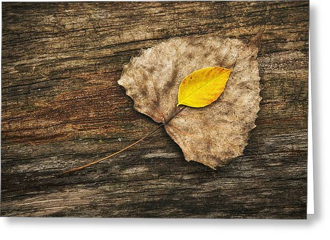 Two Leaves  Greeting Card by Scott Norris