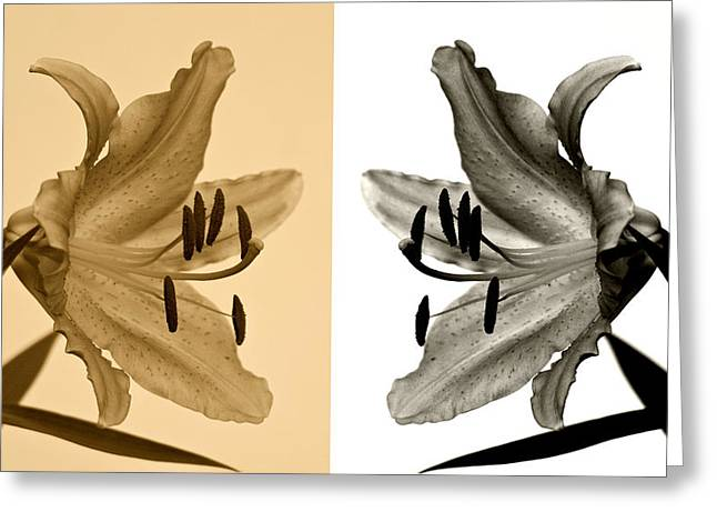 Two Lilies Greeting Card by Sandy Keeton