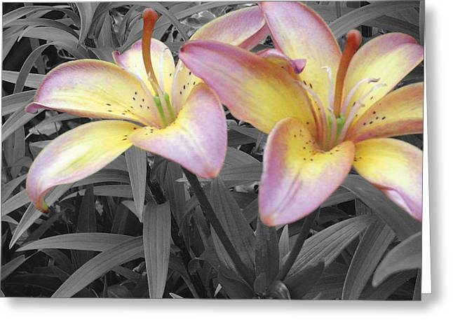 Lilies Pyrography Greeting Cards - Two Lilies Greeting Card by Stephen Prestek