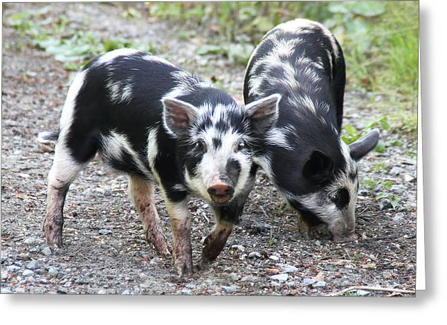Piglets Greeting Cards - Two Little Pigs Greeting Card by Peggy Collins