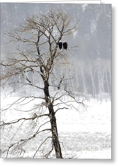 Recently Sold -  - Pairs Greeting Cards - Two Lovers Sitting in a Tree Greeting Card by Deby Dixon