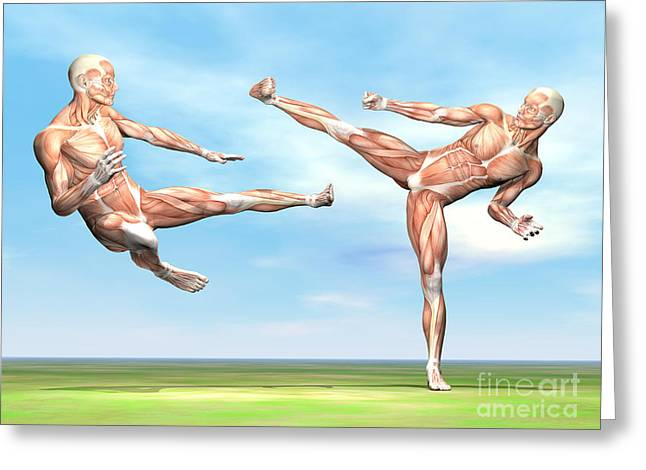 Physical Body Digital Greeting Cards - Two Male Musculatures Fighting Martial Greeting Card by Elena Duvernay