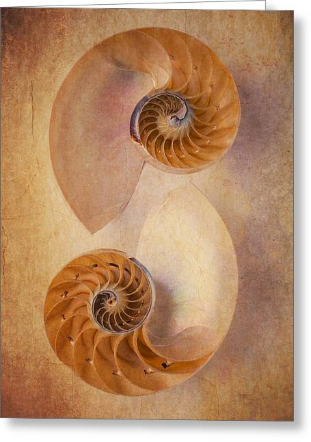 Warm Tones Photographs Greeting Cards - Two Nautilus Shells Greeting Card by Garry Gay