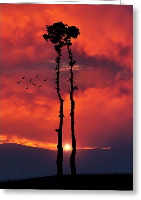 Embrace Greeting Cards - Two Oaks together in the field at sunset Greeting Card by Bess Hamiti