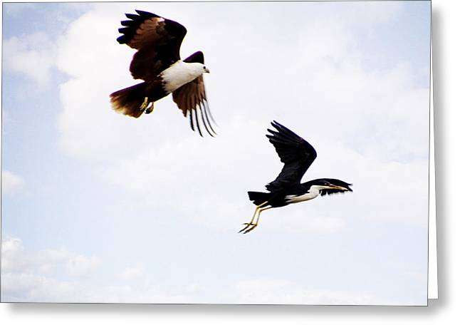 Kites Greeting Cards - Two of a Different Kind V2 Greeting Card by Douglas Barnard
