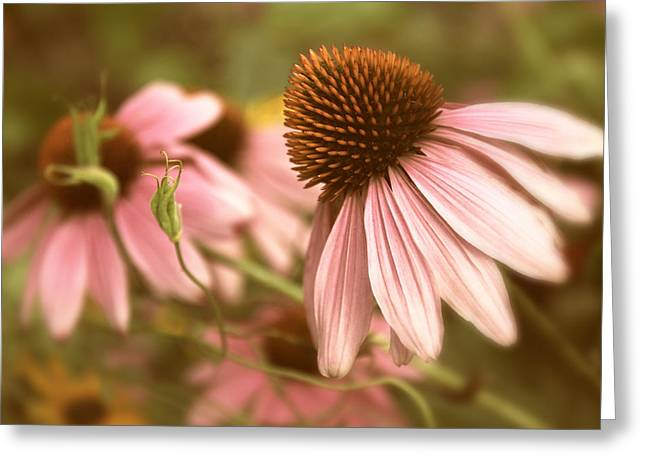 Cone Flowers Greeting Cards - Two of a Kind Greeting Card by Jessica Jenney