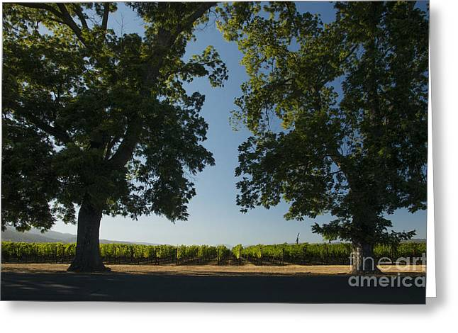 Wine Vineyard Greeting Cards - Two Old Friends Greeting Card by Jon Neidert