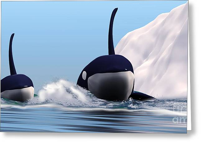Sea Creature Pictures Greeting Cards - Two Orca Whales Greeting Card by Corey Ford