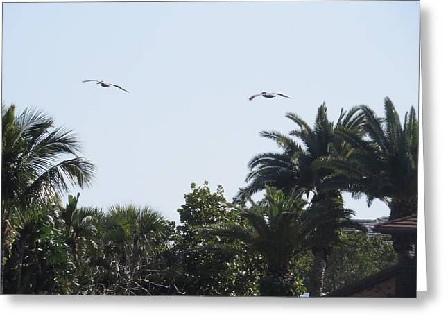 Pelican Greeting Cards - Two pelicans Greeting Card by Zina Stromberg