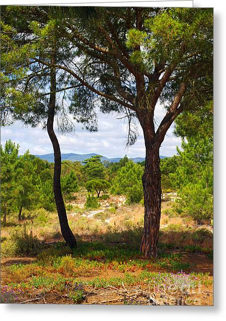 Woodland Scenes Greeting Cards - Two pine trees Greeting Card by Carlos Caetano