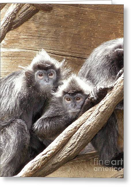 Animal Art Greeting Cards - Two Posing Chimpanzees  Greeting Card by Anthony Morretta