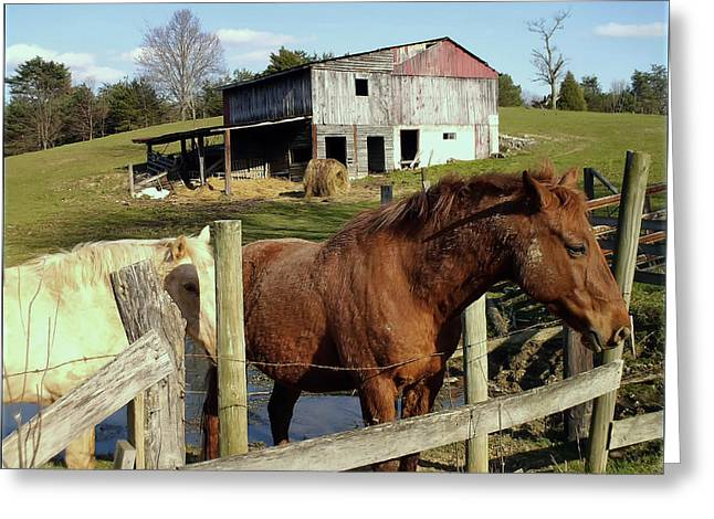 Two Quarter Horses In A Barnyard Greeting Card by Chris Flees