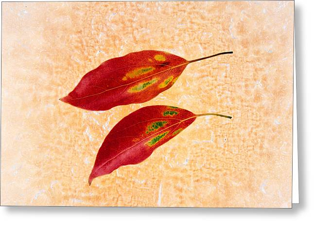 Side By Side Greeting Cards - Two Red Leaves On Pink Background Greeting Card by Panoramic Images