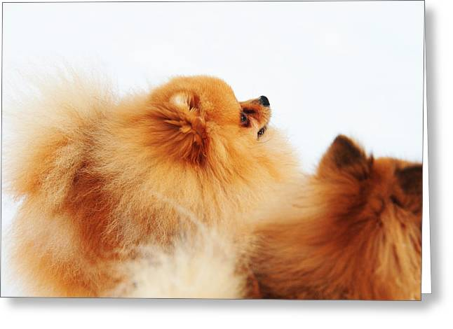 White Thick Fur Greeting Cards - Two Red Sisters Greeting Card by Jenny Rainbow