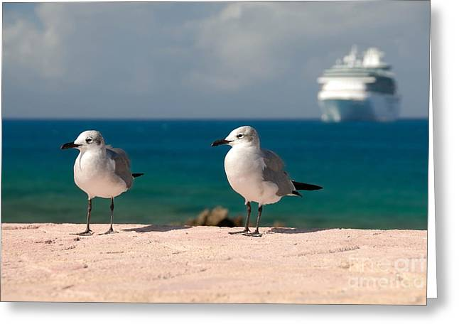 Little Stirrup Cay Greeting Cards - Two Seagulls and Cruise Ship Greeting Card by Amy Cicconi