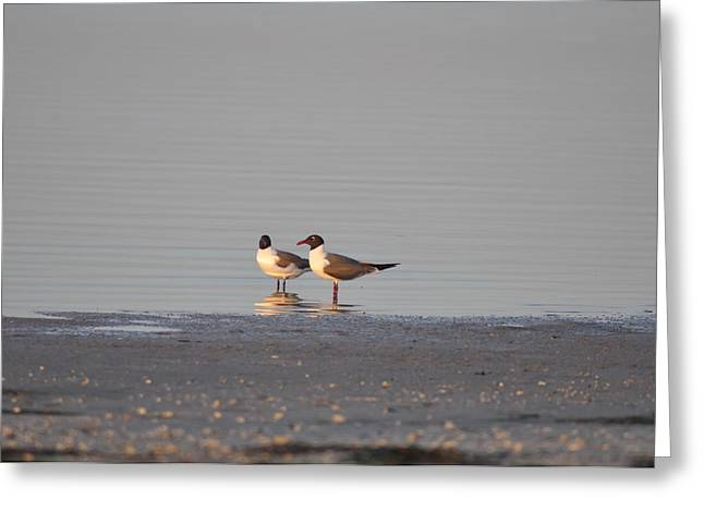 York Beach Digital Art Greeting Cards - Two Seagulls Greeting Card by Bill Cannon