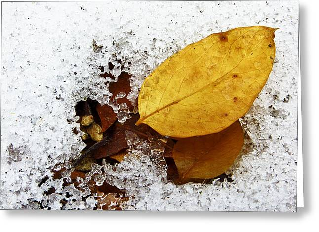 Ice And Warm Colors Greeting Cards - Two Seasons Greeting Card by Shawna  Rowe