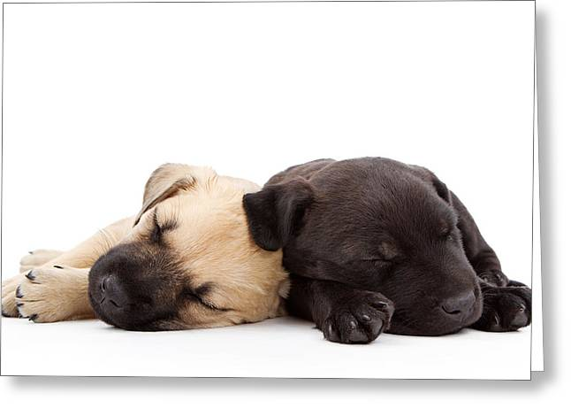 Shepherds Greeting Cards - Two sleeping puppies laying together  Greeting Card by Susan  Schmitz
