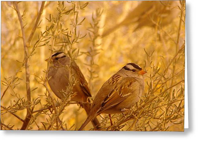 Living Things Greeting Cards - Two small birds Greeting Card by Jeff  Swan