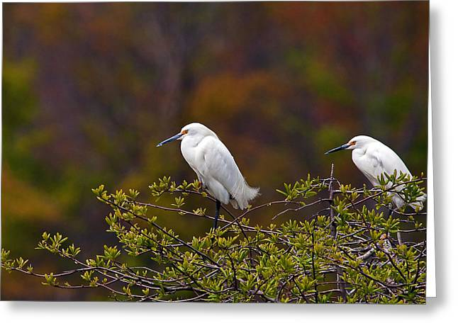 Snowie Greeting Cards - Two Snowies Greeting Card by Benjamin DeHaven