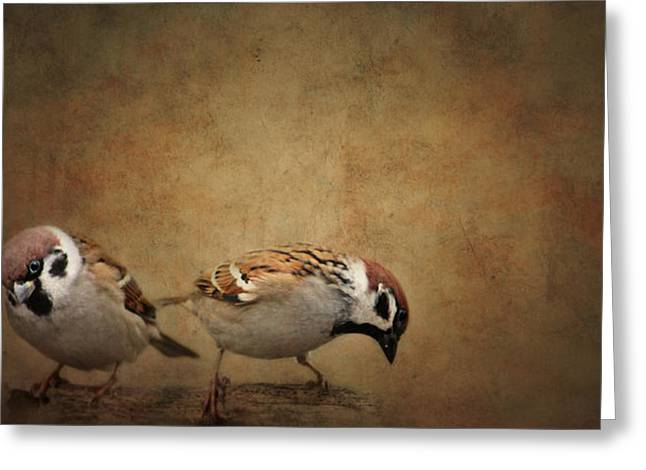 Sparrow Greeting Cards - Two Sparrows Greeting Card by Heike Hultsch