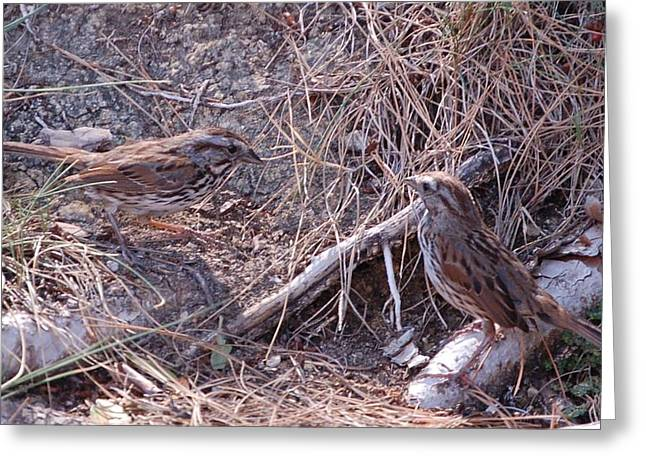 Dander Greeting Cards - Two Sparrows in Camouflage  Greeting Card by Linda Brody