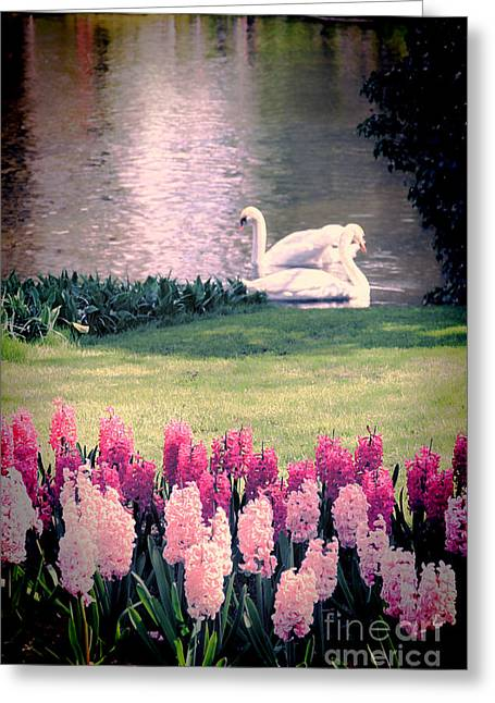 Peaceful Pond Greeting Cards - Two Swans Greeting Card by Jasna Buncic