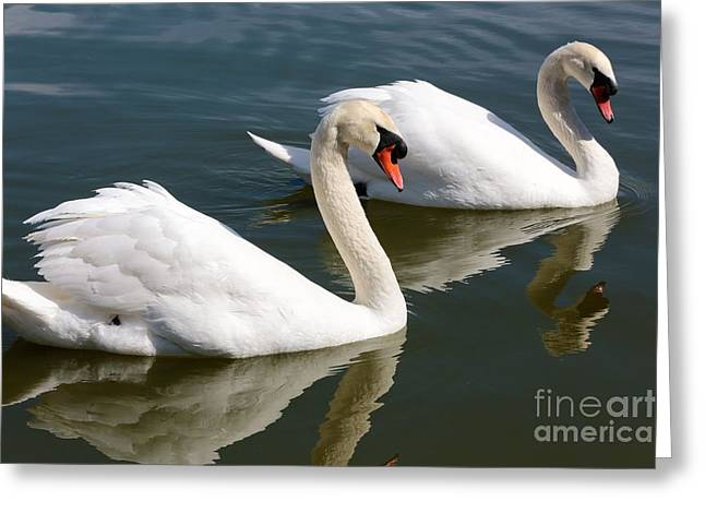 Two Swimming Swans Greeting Card by Carol Groenen