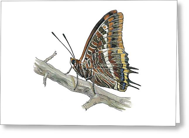 Cut-outs Greeting Cards - Two-tailed pasha butterfly, artwork Greeting Card by Science Photo Library