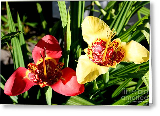 Shower Curtain Greeting Cards - Two Tiger Lilies 1 Greeting Card by  ILONA ANITA TIGGES - GOETZE  ART and Photography