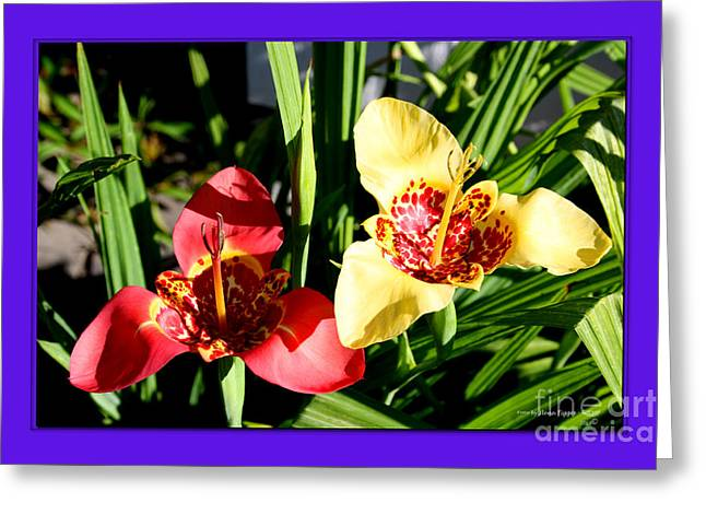 Shower Curtain Greeting Cards - Two Tiger Lilies Greeting Card by  ILONA ANITA TIGGES - GOETZE  ART and Photography
