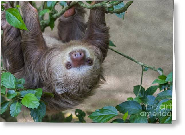 Sloth Digital Greeting Cards - Two toed sloth hanging in tree Greeting Card by Patricia Hofmeester