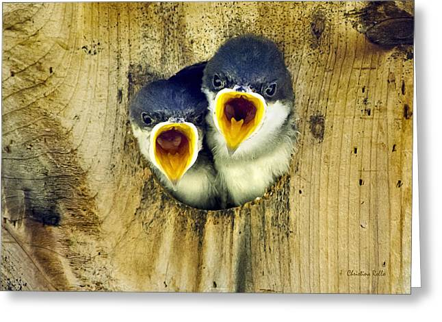 Hungry Chicks Greeting Cards - Two Tree Swallow Chicks Greeting Card by Christina Rollo