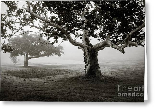 Warm Tones Greeting Cards - Two Trees Colt State Park Greeting Card by David Gordon