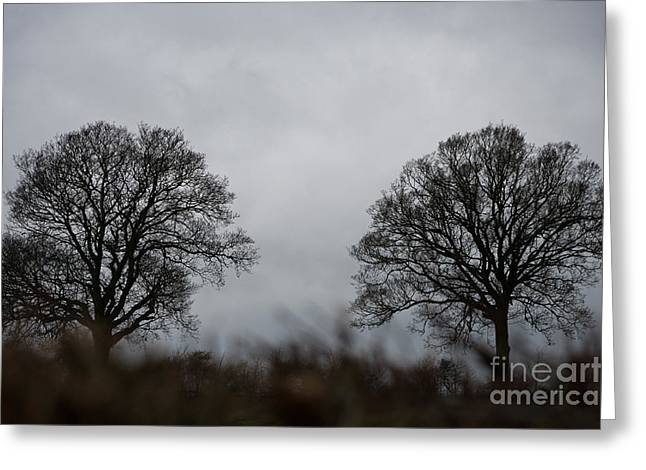 Pairs Greeting Cards - Two Trees Greeting Card by Wolf Kettler