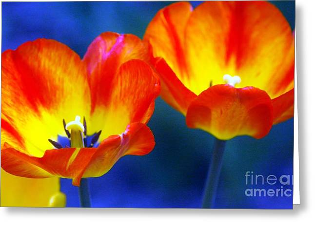 Struckle Greeting Cards - Two Tulips Greeting Card by Kathleen Struckle