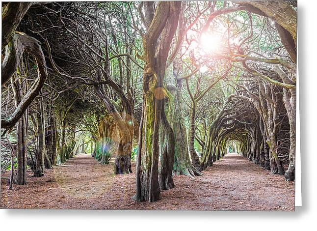 Overgrown Greeting Cards - Two Tunnels Taxus Greeting Card by Semmick Photo