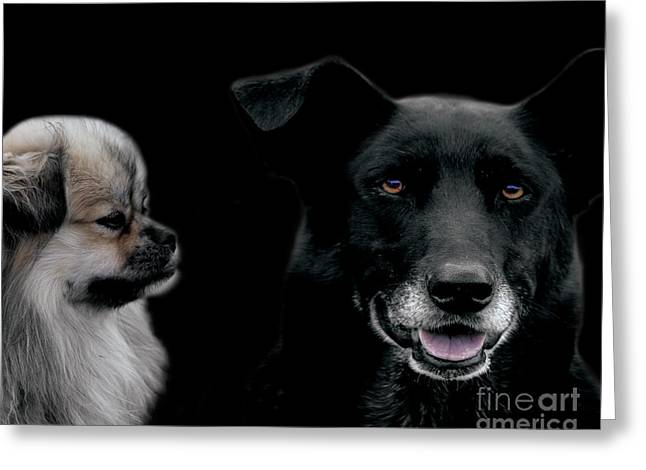Neutered Greeting Cards - Two Types of Mutts Greeting Card by Nola Lee Kelsey