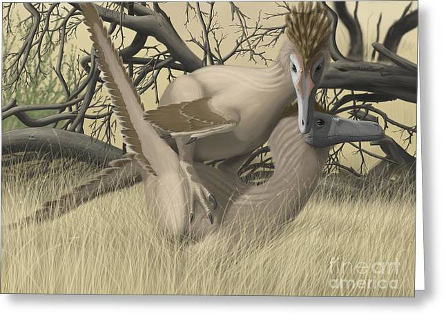 Dromaeosaurid Greeting Cards - Two Velociraptors During Mating Season Greeting Card by Michele Dessi