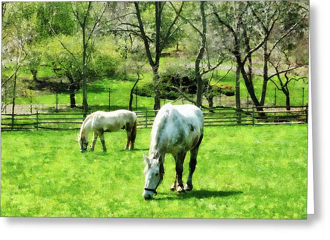 Farm Greeting Cards - Two White Horses Grazing Greeting Card by Susan Savad
