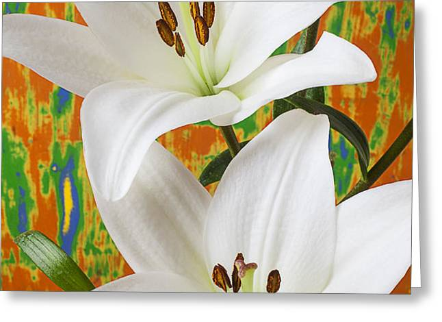 Two white lilies Greeting Card by Garry Gay