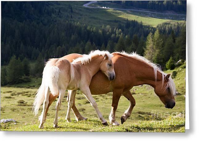 Two Wild Horses Greeting Card by Matteo Colombo